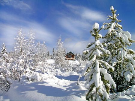 Cabin in stand of pine trees covered in snow in the winter Stock Photo