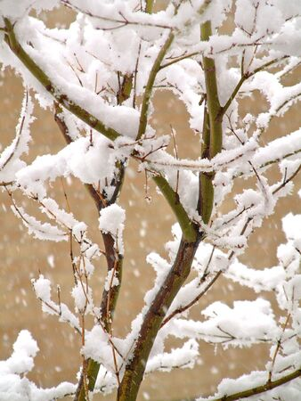 Close up of tree branches covered in snow in the winter Stock Photo