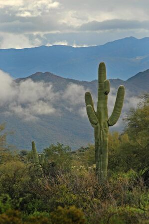 superstition: Saguaro Cactus in Arizona with Superstition Mountains sky and Clouds Stock Photo