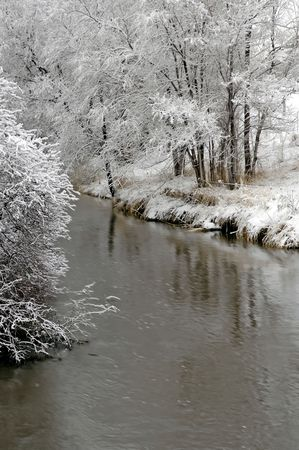 Stand of trees covered in snow in the winter with river