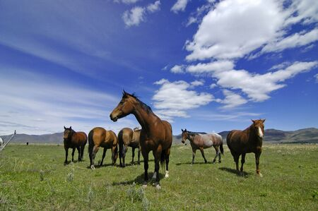 ranching: View of horses with white and gray storm clouds in blue sky