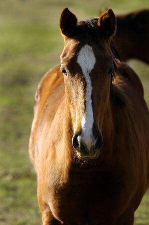Closeup portrait of horse with blurred background Reklamní fotografie