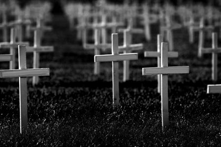 honoring: Rows of crosses honoring soldiers killed at war