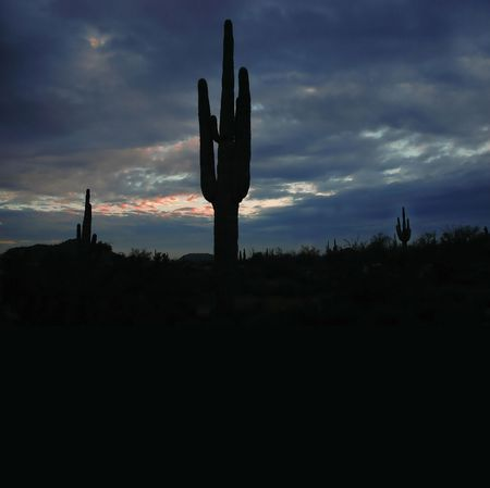 Saguaro Cactus in Arizona with sky and Clouds photo