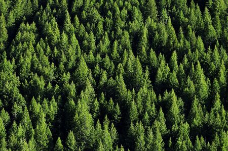 forrest: View of forrest of green pine trees on mountainside Stock Photo
