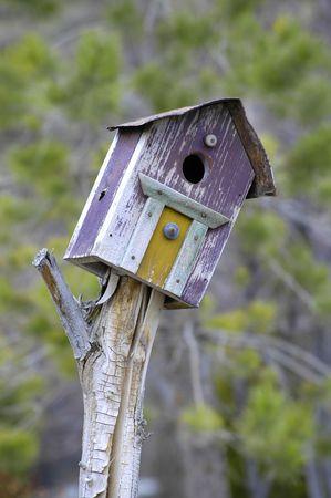 maison oiseau: Vieille maison d'oiseaux en bois violet dans le jardin Banque d'images