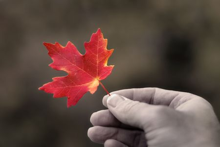 Detail of red maple leaf held in hand with autumn trees in background photo