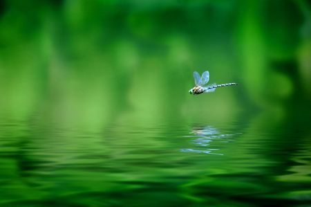 Reflection of dragonfly hovering over lake water photo