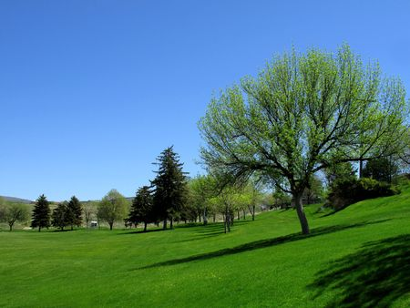 Park with Blue Sky, Trees and Green Grass           Stock Photo - 5327347