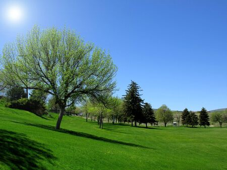 Park with Blue Sky, Trees and Green Grass           Stock Photo - 5327346