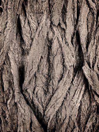 Closeup of grey bark on a tree Stock Photo - 5327358