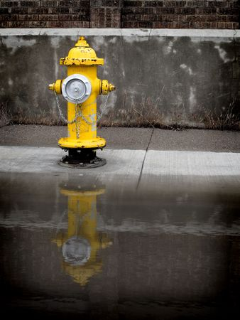 Yellow fire hydrant on sidewalk reflected in puddle of water
