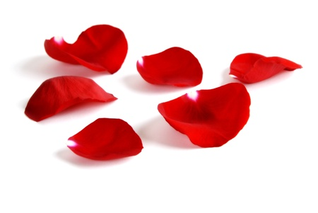 Several Red Rose petals Isolated on white background