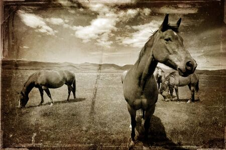 Vintage photograph of horses with white and gray storm clouds in sky photo