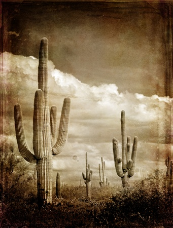 saguaro: Wintage photograph of saguaro Cactus in Arizona with sky and Clouds