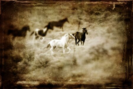 Vintage photograph of horses with white and gray storm clouds in sky