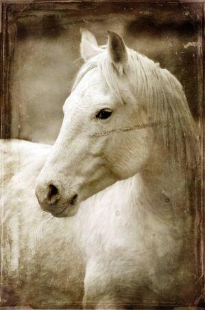 Vintage foto van paarden met witte en grijze onweerswolken aan de hemel