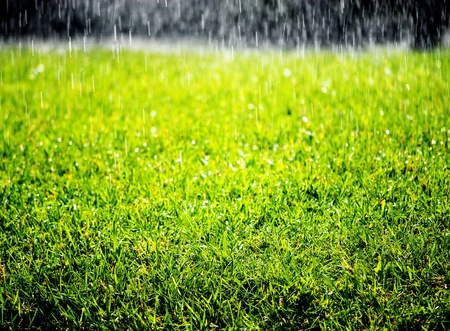 grassy field: Closeup detail of texture in green grass lawnwith rain falling on it