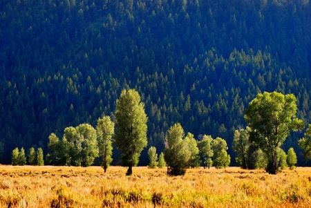 Mountain meadow with trees and sunlight in grassy field photo