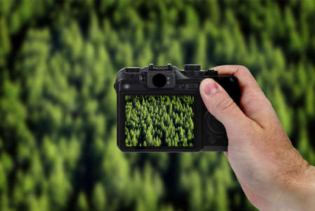 taking photograph: Hand holding point and shoot camera taking phtograph of forrest