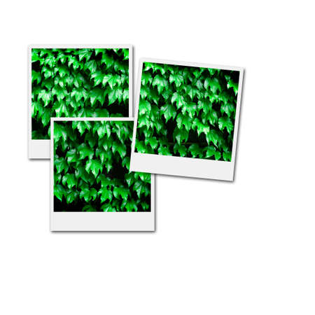 Several instant film frames on an isolated white background with green leafs and plants