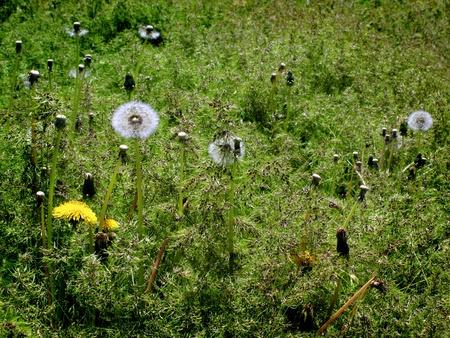 마당이나 들판에있는 단디 온 잡초 스톡 콘텐츠