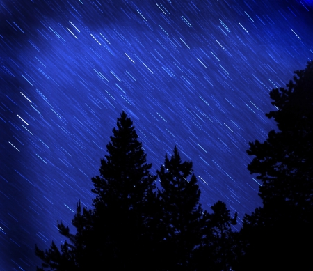 polaris: Star trails in blue night sky with pine trees silhouetted in front