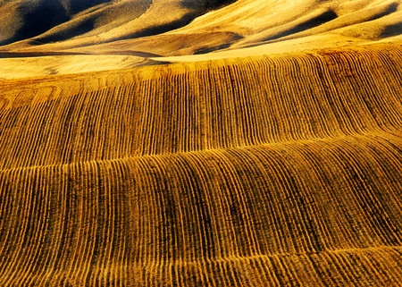 Rows of furrows for crops growing in agricultural field photo
