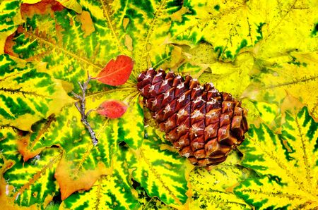 Closeup of Pinecone on fall leaves photo