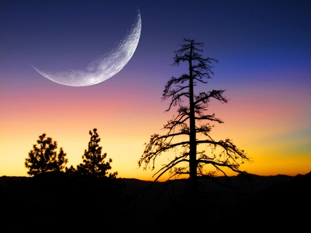 pine tree silhouette: Sunset or sunrise with silhouette of pine trees with crescent moon