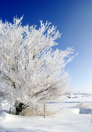 frigid: Tree covered with frost with blue sky in background Stock Photo
