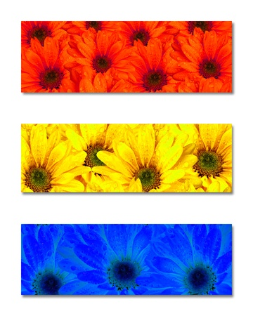 primary colors: Abstract art of three strips of flowers with the primary colors of red yellow and blue