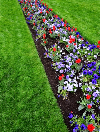 flower bed: Large garden with variety of freshly grown flowers and greenery
