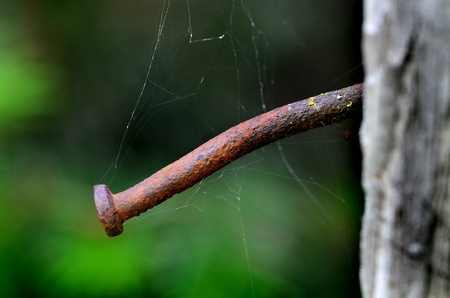 Rusted old nail with cob webs in an old weathered board Stock Photo - 21026223