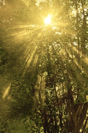 Sunlight shining through trees with streams of light photo