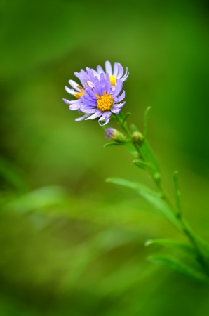 small purple flower: Small purple flower and raindrops with green background