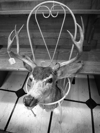head tag: Deer head with price tag in a garage or second hand sale Stock Photo