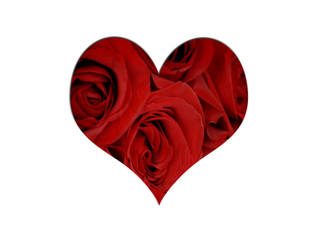 Several Red Roses Isolated on white background Stock Photo