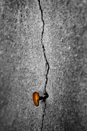 rusty nail: Detail shot of an old cracked wall with a rusty nail in it Stock Photo