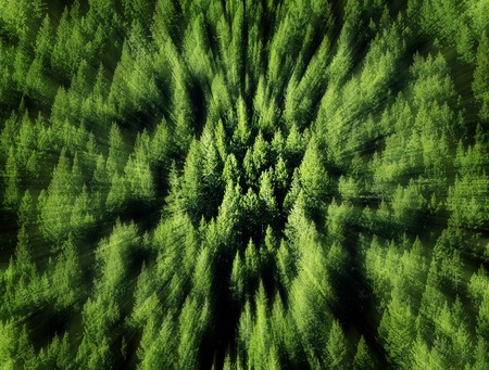 pine trees: Forest of green pine trees on mountainside with late afternoon sunlight and zoom blur Stock Photo