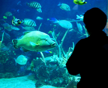 subaquatic: One person silhouetted standing and looking at fish in aquarium