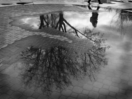 cobble: Puddle reflection of tree and person walking past cobblestone walkway Stock Photo
