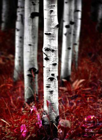 Detail of fall autumn birch aspen trees 写真素材