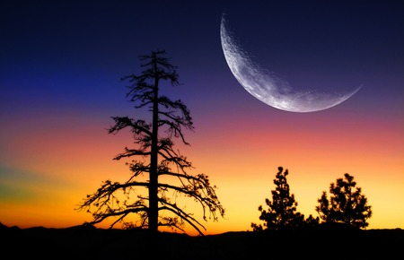 Pine trees and sunrise with moon in the mountains photo