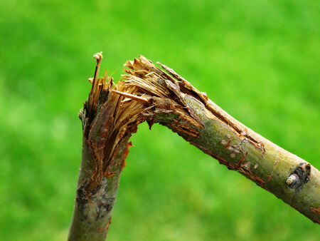 tree removal service: Detail of broken branch for storm destruction