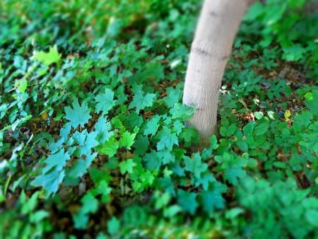 adn: Detalle de las plantas de crecimiento verde adn árbol con enfoque estrecho