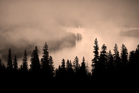 Fog and pine tree on rugged mountainside during storm