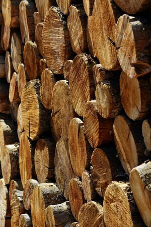 monies: Stack of pine logs in fire pile for buring in fire place