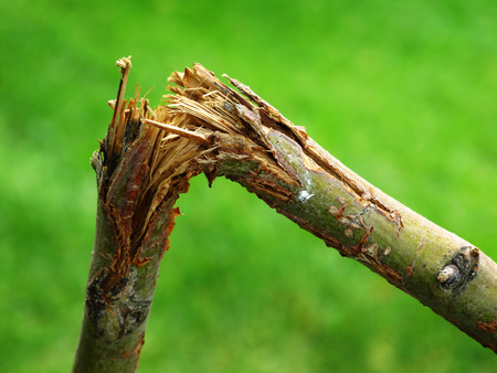 branch: branche cassée encliqueté sur l'herbe verte floue en arrière-plan