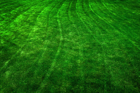 vitality: Closeup of texture in green grass lawn detail mowing lines